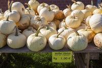 White Pumpkin, (Cucurbita maxima)