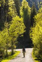 Walk in the forest in Austria