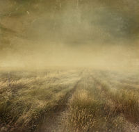 Prairie grasses with vintage color filters and tex