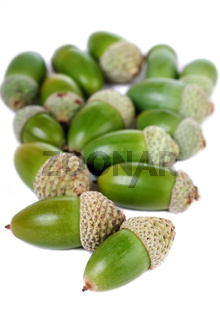 Heap of green acorns isolated
