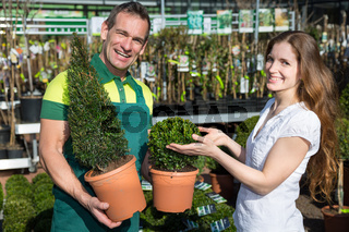 Gardener at garden center or nursery presenting boxtrees to customer