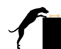 Hund stiehlt Knochen - Dog steals bone