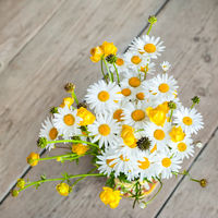 Beautiful tender bouquet of summer meadow flowers with wild chamomiles on wooden background. Floral composition in rural vintage style