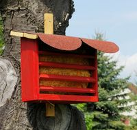 Florfliegenkasten - insect hotel for green lacewing 02