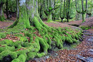 Buchenwald, Naturpark Gorbea, Baskenland, Spanien