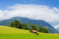 Green Meadow in Swiss alp