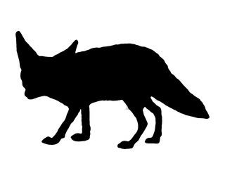 Wüstenfuchs Silhouette - Fennec fox silhouette