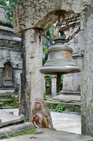 Monkey in temple