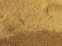 Brown rice drying