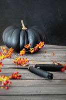 Black colored pumpkin with berries and scissors on