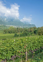 Wine Village of Kaltern,South Tyrol,Italy