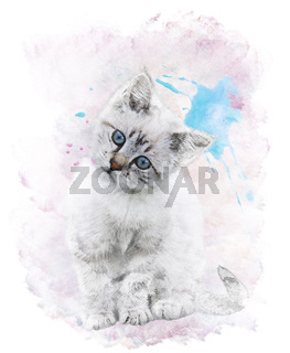 Watercolor Image Of   White Kitten