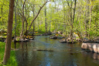 River in the woodlands of Sweden in spring