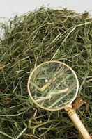A needle in a haystack 2