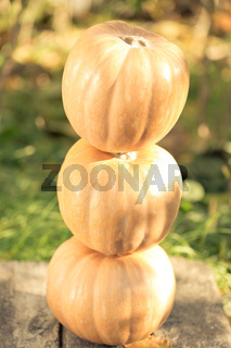 Pyramid from pumpkins on wood