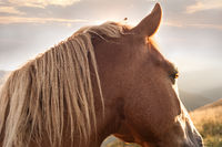 Sunset in mountains nature background. Horse at summer meadow. Image in vintage retro hipster style