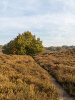 path through heathland in fall