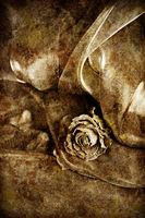 Vintage background: Dry rose on satin. Black and white image, shallow depth of field