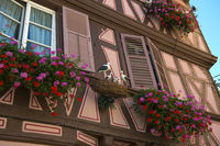 Half-timbered house with stork nest,Colmar,France
