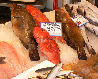 Fisch Marktstand
