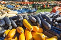 pumpkins for sale, Germany