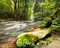 Tropical rainforest landscape with flowing river, rocks and jungle plants. Thailand