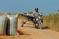 Man on motorbike passing rice bags, Cambodia