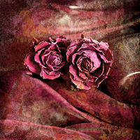 Grunge background in vintage style. Dry rose flower on satin
