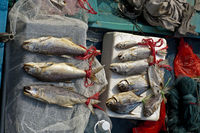 Fresh fish for sale at a market stall