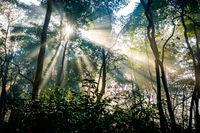Sunrays passing through trees