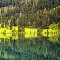 Trees and green meadow water reflection