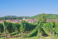 Kaiserstuhl Wine region,Black Forest,Germany