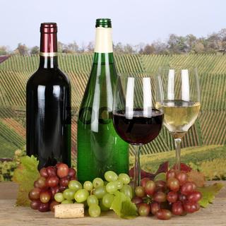 Neuer Wein in Weinbergen
