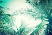 Summer background with tropical palm tree