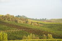 Chianti in Autumn