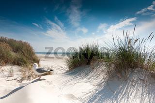 Nordsee - Duenenlandschaft