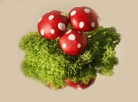 lucky fungal