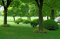 The panorama of trees and manicured plants in city park