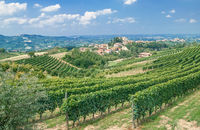Vineyard Landscape in Piedmont,Italy