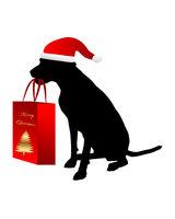Hund mit Weihnachtsgeschenk - Dog with christmas gift