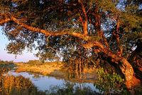 landscape at Mphongolo Drive at Kruger NP