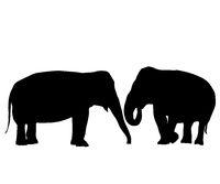 In love elephants