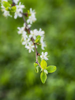Blüten mit Blatt Bokeh
