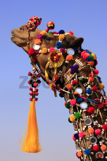 Portrait of decorated camel at Desert Festival, Jaisalmer, India