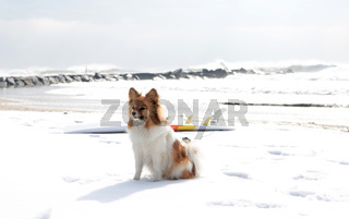 Cold water surfing dog