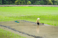 Vietnamese farmer works at rice field. Ninh Binh, Vietnam