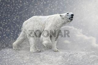 Arktischer Riese