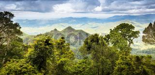 Queensland Rainforest