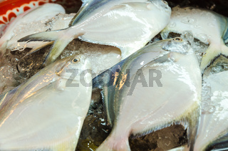 Raw white Pomfret fish