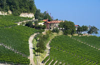 Winery near Montforte d'Alba, Piedmont, Italy
